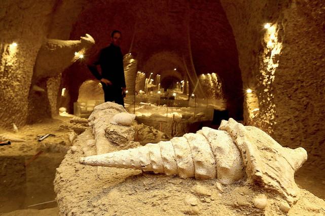 C'est une véritable cave à coquillages quePatrice Legrand... (Photo FRANCOIS NASCIMBENI, AFP)