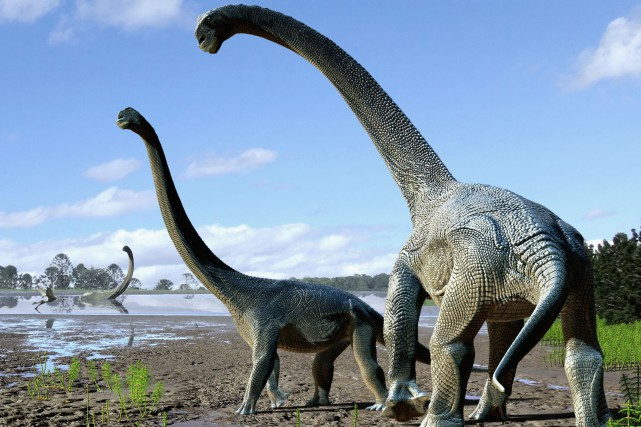 Baptisé Savannasaurus elliottorum, ce dinosaure au long cou... (PHOTO AFP)