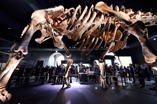 Un titanosaure exposé au American Museum of Natural... (ARCHIVES AFP)