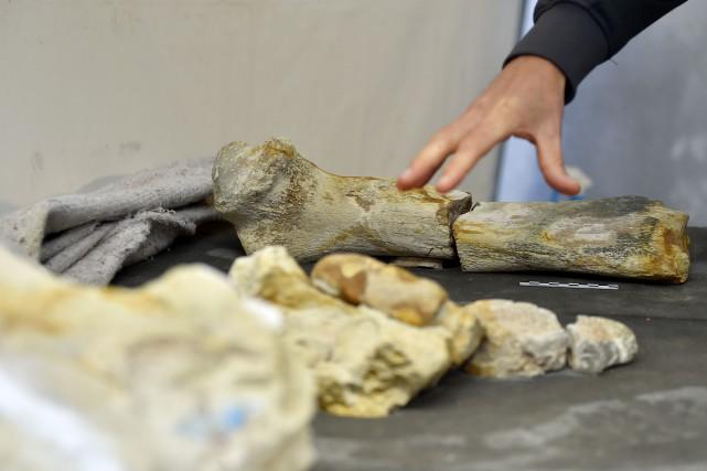 Ces ossements - un fémur de 51cm de... (Photo Loic Venance, Agence France-Presse)