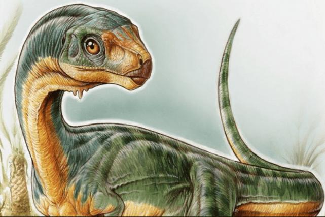 Le Chilesaurus a la tête d'un carnivore, mais... (Photo tirée de Twitter)