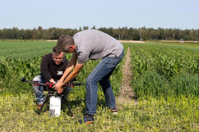 Les agriculteurs québécois ont désormais recours auxtrichogrammes -... (Photo François Roy, La Presse)