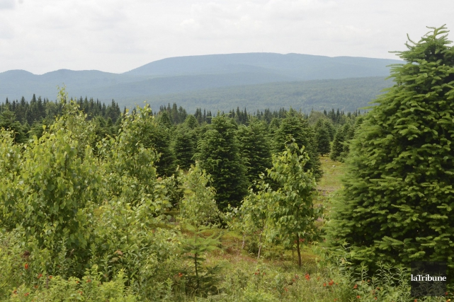 Des arbres encore remplis de feuilles vertes en ce début du mois d'octobre près... (Photo Archives, La Tribune)