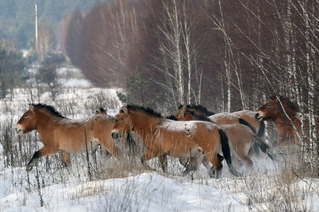 Cette découverte inattendue qui signifie que les chevaux... (PHOTO  GENYA SAVILOV, ARCHIVES AFP)