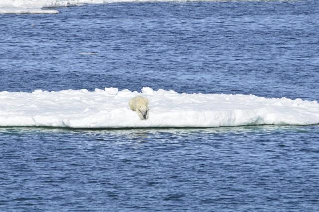 «Des températures positives près du pôle Nord en... (Photo Brian Battaile archives USGS via AP)