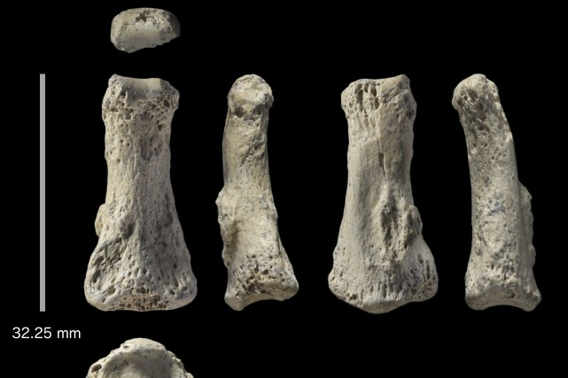Cet os serait le plus vieux fossile d'Homo... (Photo Associated Press)