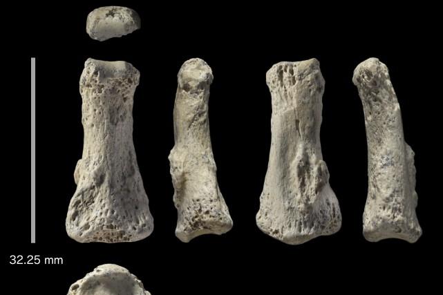 Cet os serait le plus vieux fossile d'Homo... (Photo Associated Press)