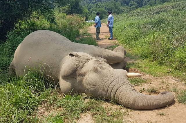 L'éléphant tué cette fois-ci était un mâle d'une... (Photo Agence France-Presse/Daily News)