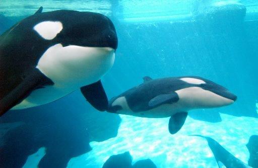 Des orques peuvent-elles porter plainte pour esclavage?