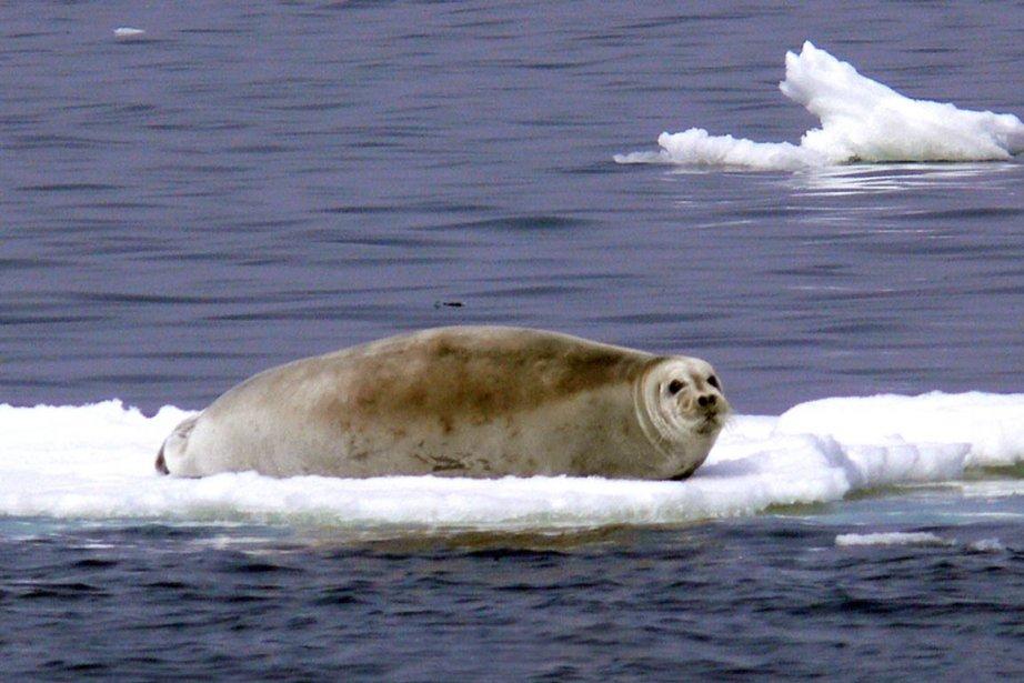Les maux de la terre gagnent les océans