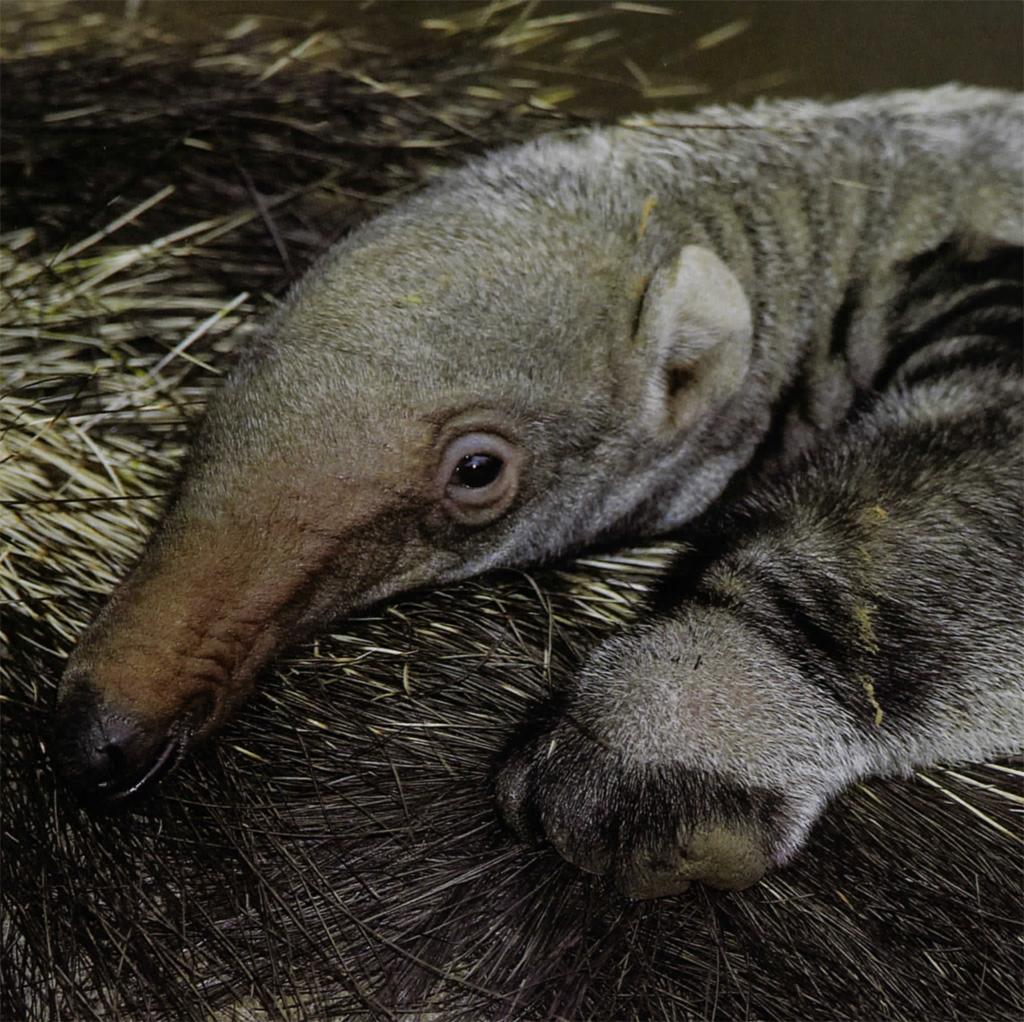 Baby Animals In Grasslands