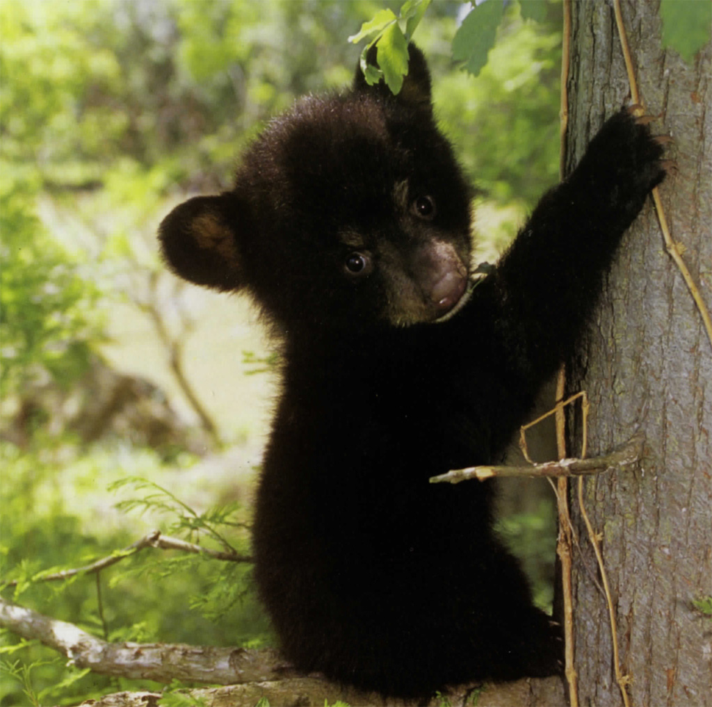 Baby Forest Animals Real