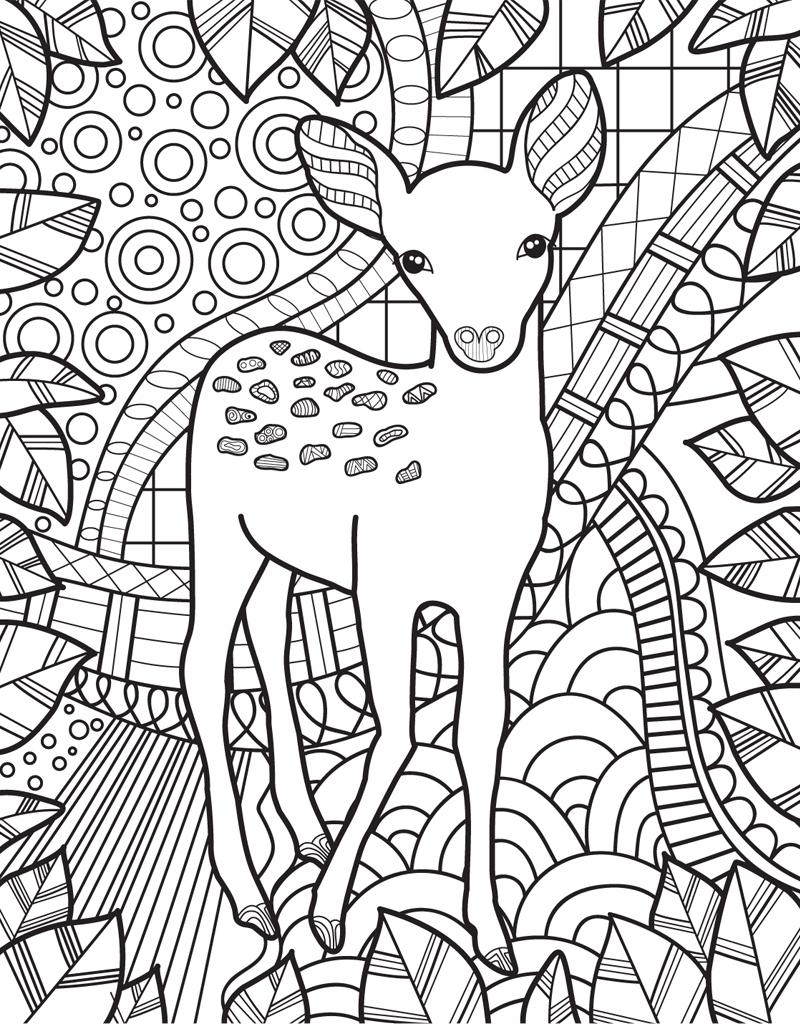 zendoodle coloring baby animals  jeanette wummel  macmillan