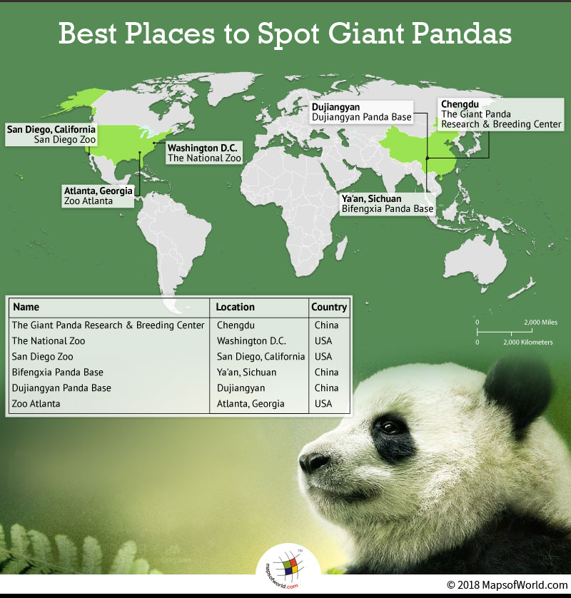 World map depicting best locations to spot Pandas