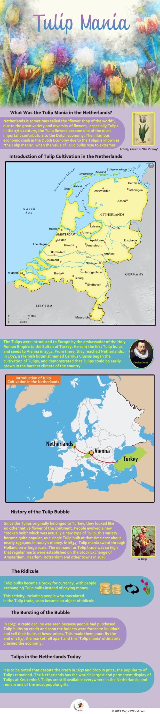 Infographic - Tulip Mania