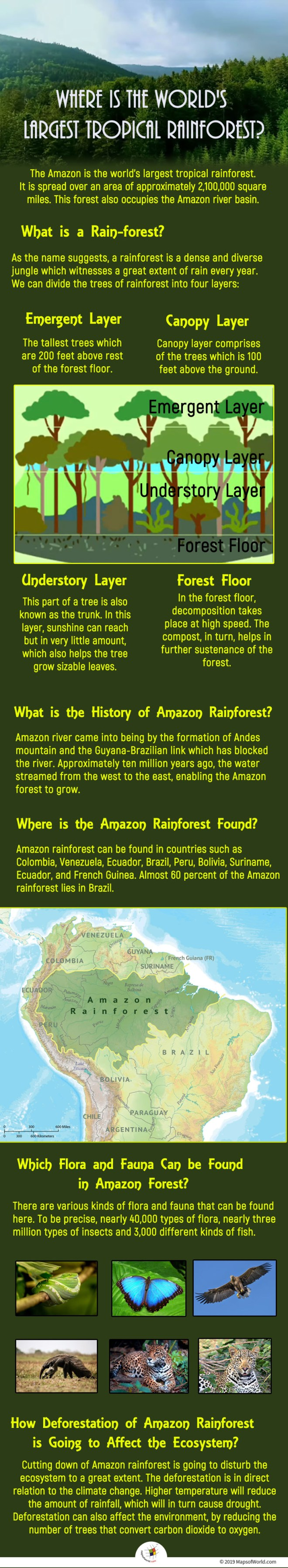 The Amazon is the world's largest tropical rainforest