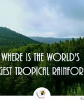 World's Largest Tropical Rainforest