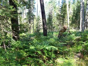 Photo of TBD Fire Tower #Parcel A, Channing, MI 49815 (MLS # 1104375)