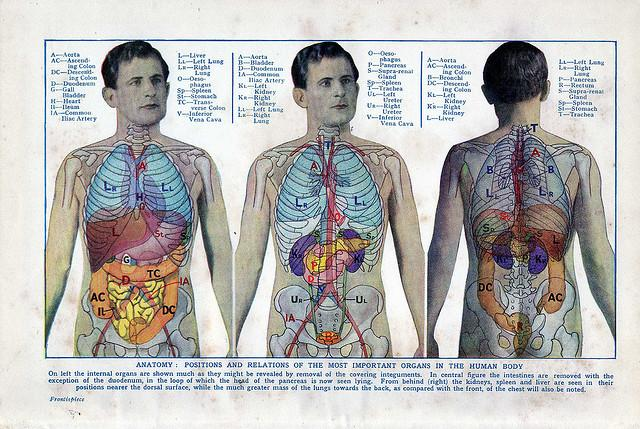 healthy heart diagram electrical schematics and wiring diagrams the effects of obesity you can't always see: 5 major organs damaged by excess body fat