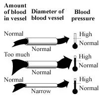 High Blood Pressure Related Kidney Disease: Get Answers