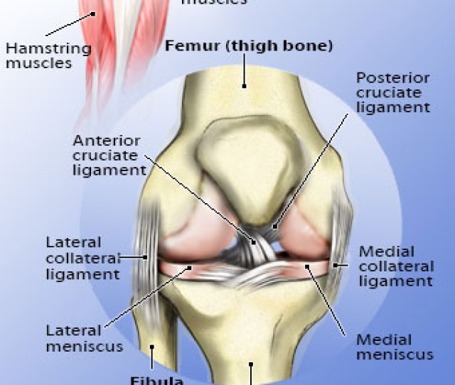 Knee Pain Facts