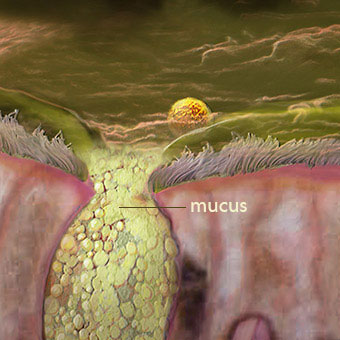 What Is Mucus? Learn How to Get Rid of It