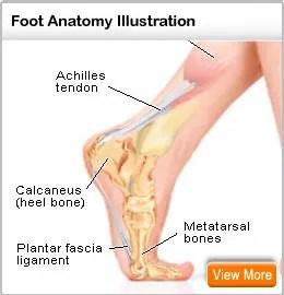 Broken Foot: Pictures Symptoms Treatment & Healing Time