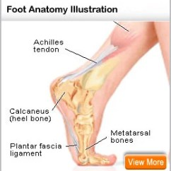 Bones In Your Foot Diagram Lymph Nodes Neck Broken Symptoms Swelling Pictures And Healing Time Picture Of The