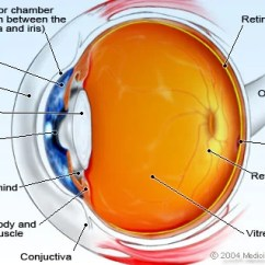 Parts Of The Eye Diagram And Function Farmall H Anatomy Detail Picture Image On Medicinenet Com Illustration