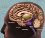 Dementia, Alzheimer's, and Aging Brains