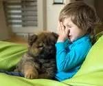 When Animal (Allergies) Attack: Pet Allergy Symptoms, Treatment