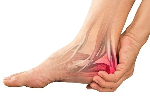The tibial nerve inside gives sensation to the bottom of the foot.