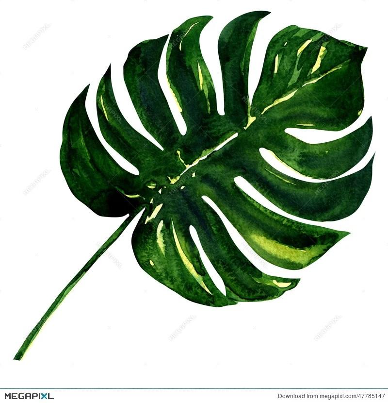 big green leaf of