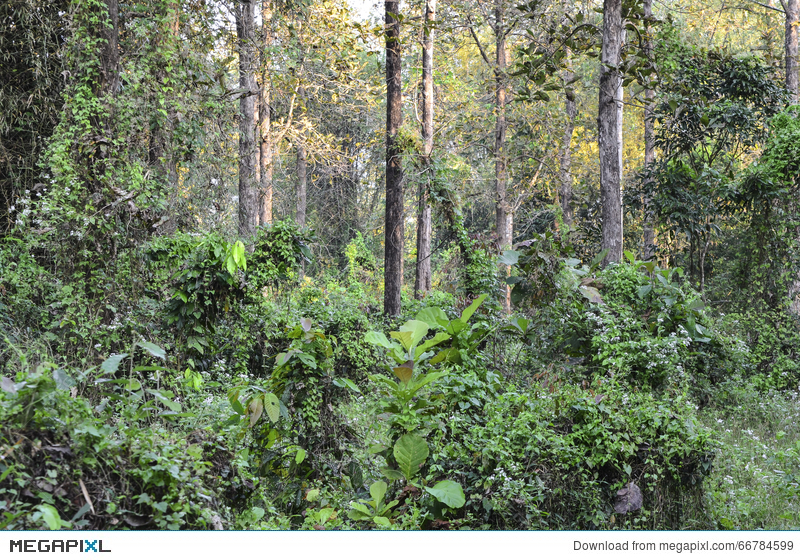 Western slopes of western ghats. An Image Of A Tropical Evergreen Forest Stock Photo 66784599 Megapixl