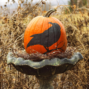 Bird pumpkin in birdbath