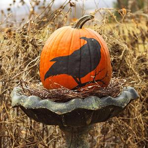 Bird pumpkin in birdbath