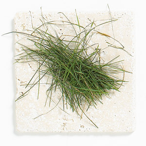 Grass Clippings on Tile