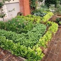 """""""How Does Your Garden Grow""""?: Patio Vegetable Garden Plan"""