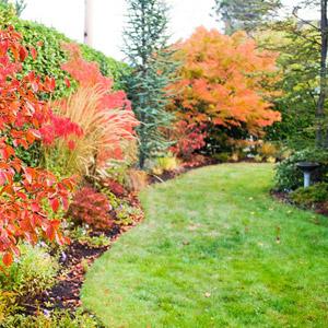 Fall lawn scene