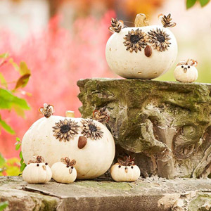 Owl Pumpkins