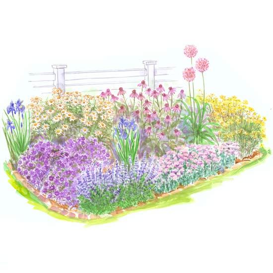 Beginner Garden For Full Sun