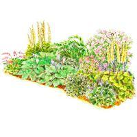 Soft-Color Shade Garden Plan