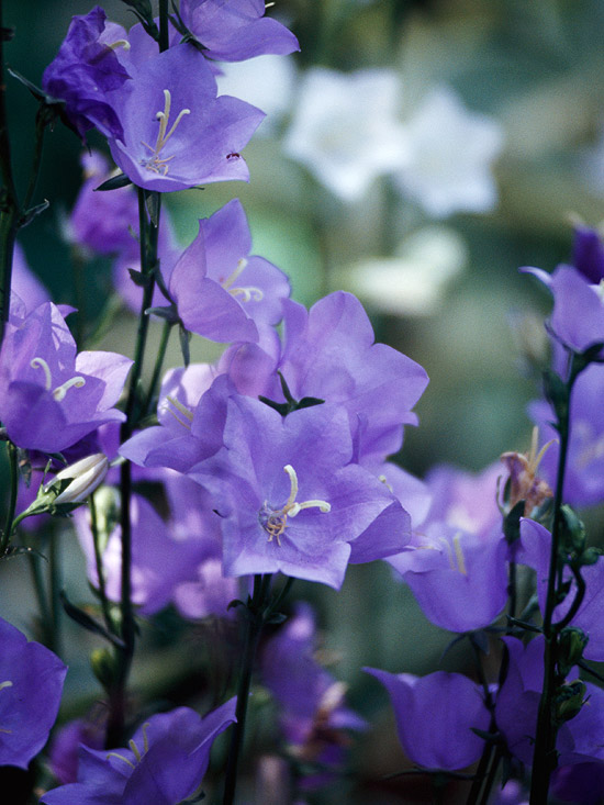 The 18 Best Plants For Cottage Gardens
