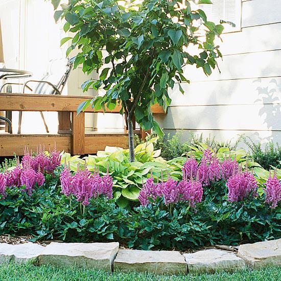 Decore com Plantas