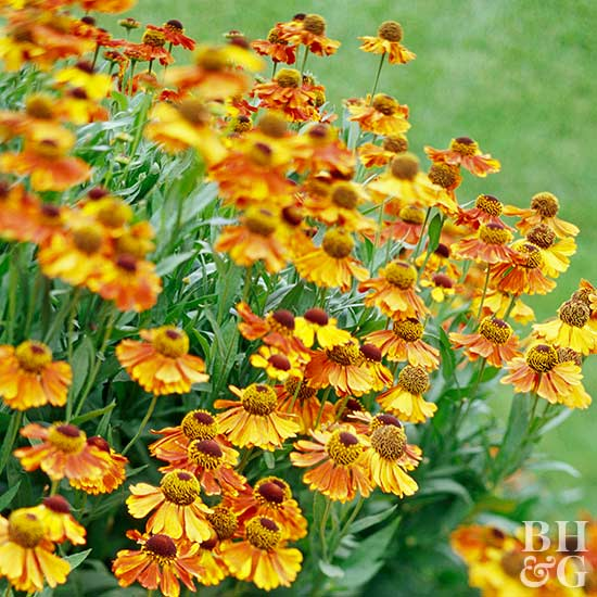 Top Flowering Plants For Fall Cottage Garden Living