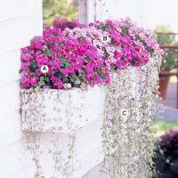Easy Recipes for Window Boxes in Shade