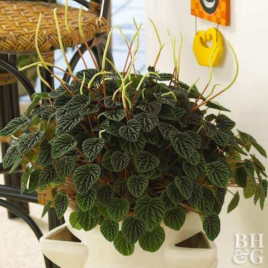 rachael ray kitchen kitchens for sale peperomia