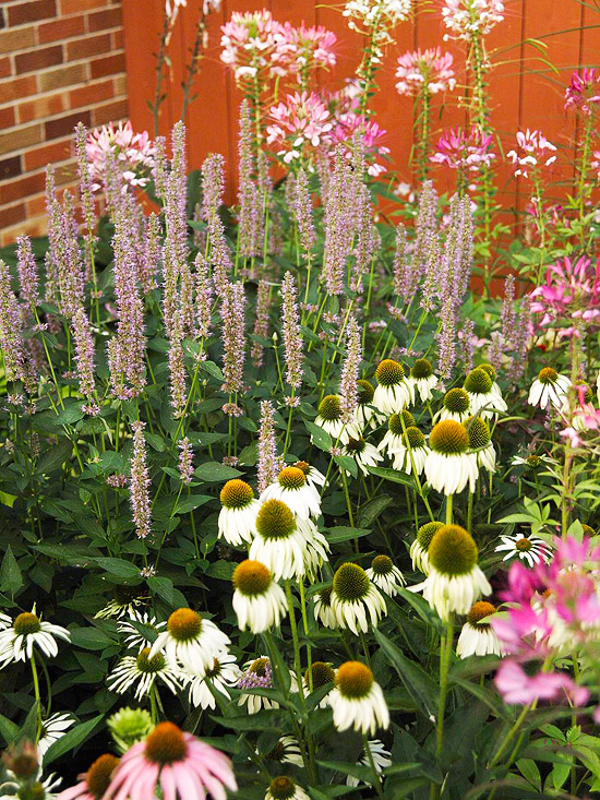 6 Steps To A No Work Cottage Garden