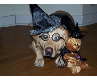 Your Best Photos: Dogs in Halloween Costumes