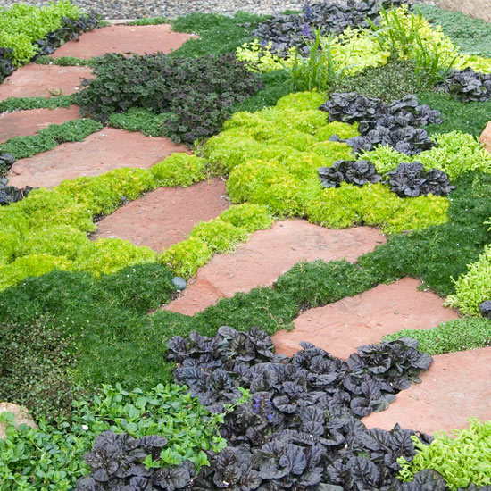 10 Great Groundcover Plants BHG Com Better Homes And Gardens